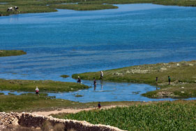 Picking samphire on the edge of the lagoon