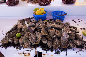 Fresh oysters for sale in Oualidia